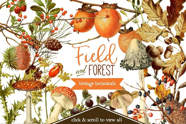 Field & Forest Vintage Botanicals