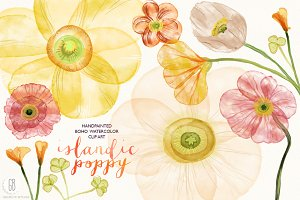 Watercolor islandic poppies flowers