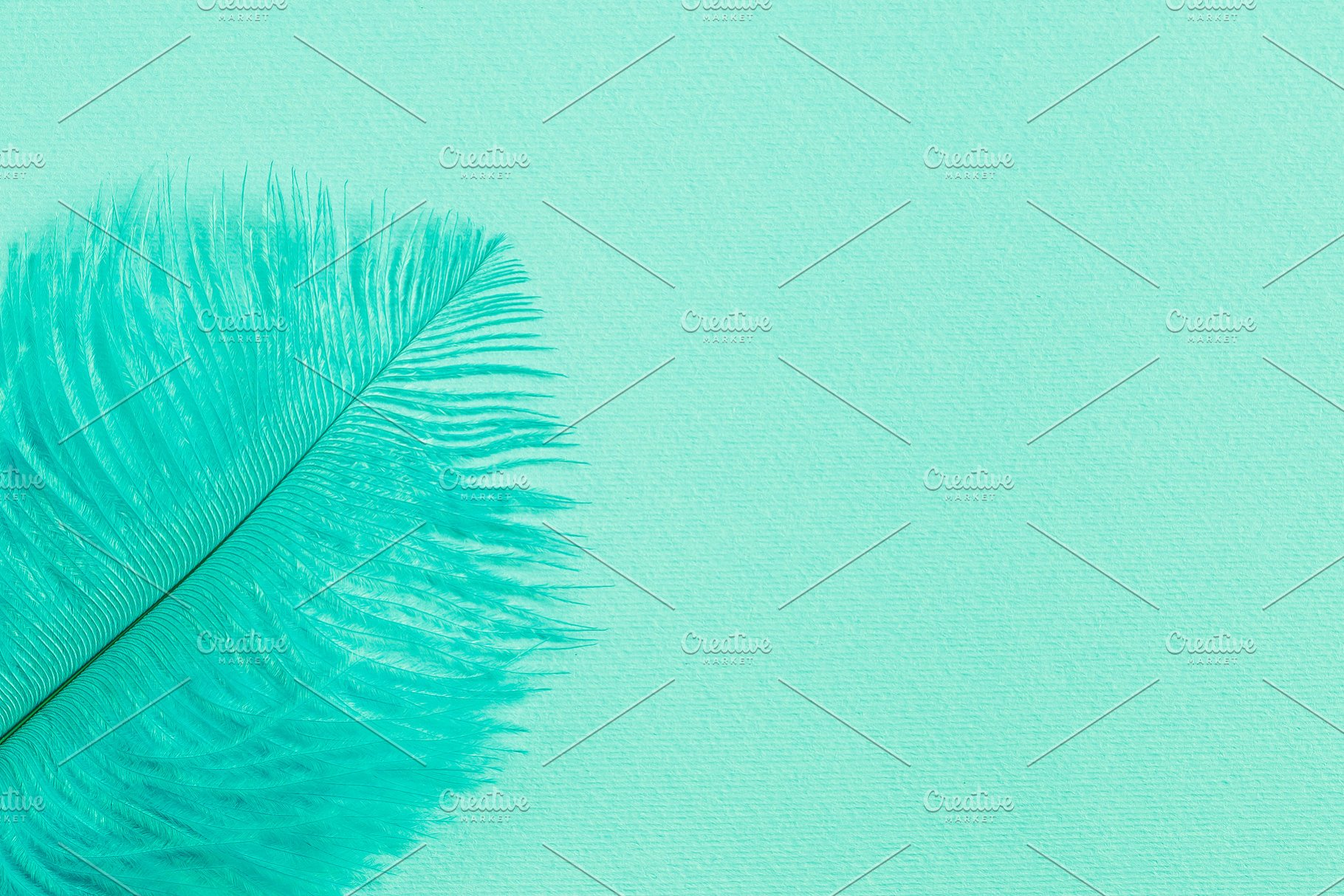 Background With Mint Green Feather High Quality Abstract Stock