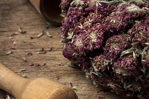 medicinal herb faith healer