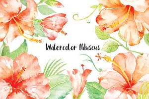 Watercolor Clipart Orange Hibiscus