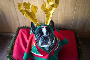 Dog_Christmas-2.jpg