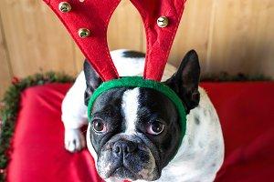 Dog_Christmas-1.jpg