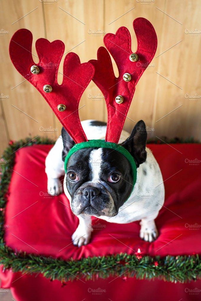 Dog_Christmas-1.jpg - Animals