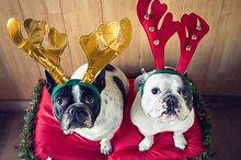 Dog_Christmas-3.jpg