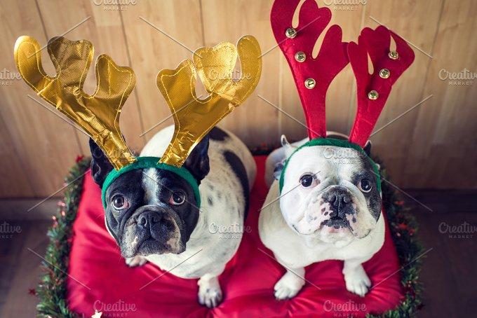 Dog_Christmas-3.jpg - Animals