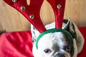 Dog_Christmas-5.jpg