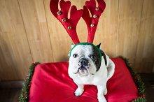 Dog_Christmas-4.jpg