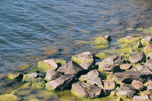 colorful mossy rocks at the beach