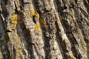 Dry Bark - Texture