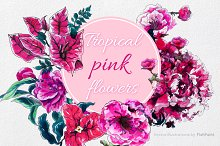 Pink tropical flowers in vector