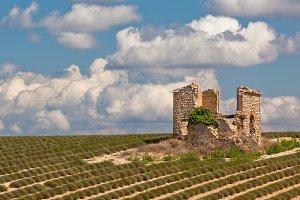 Ruin in harvested lavender field