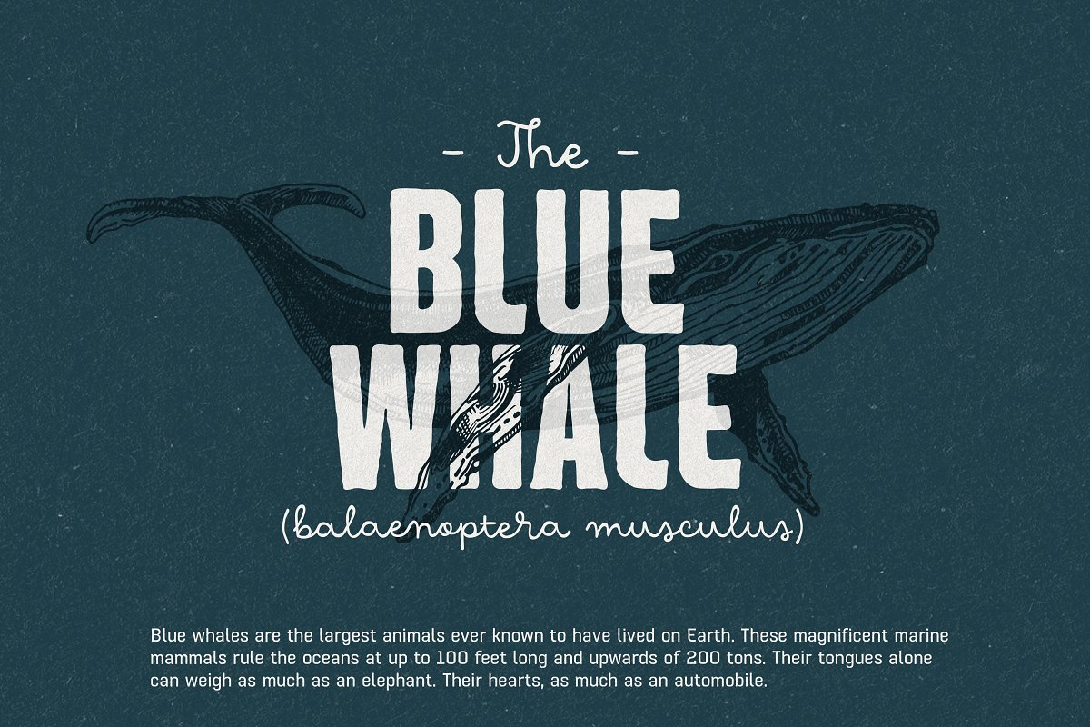 Hawkes Handmade Collection: 74% OFF in Display Fonts - product preview 5