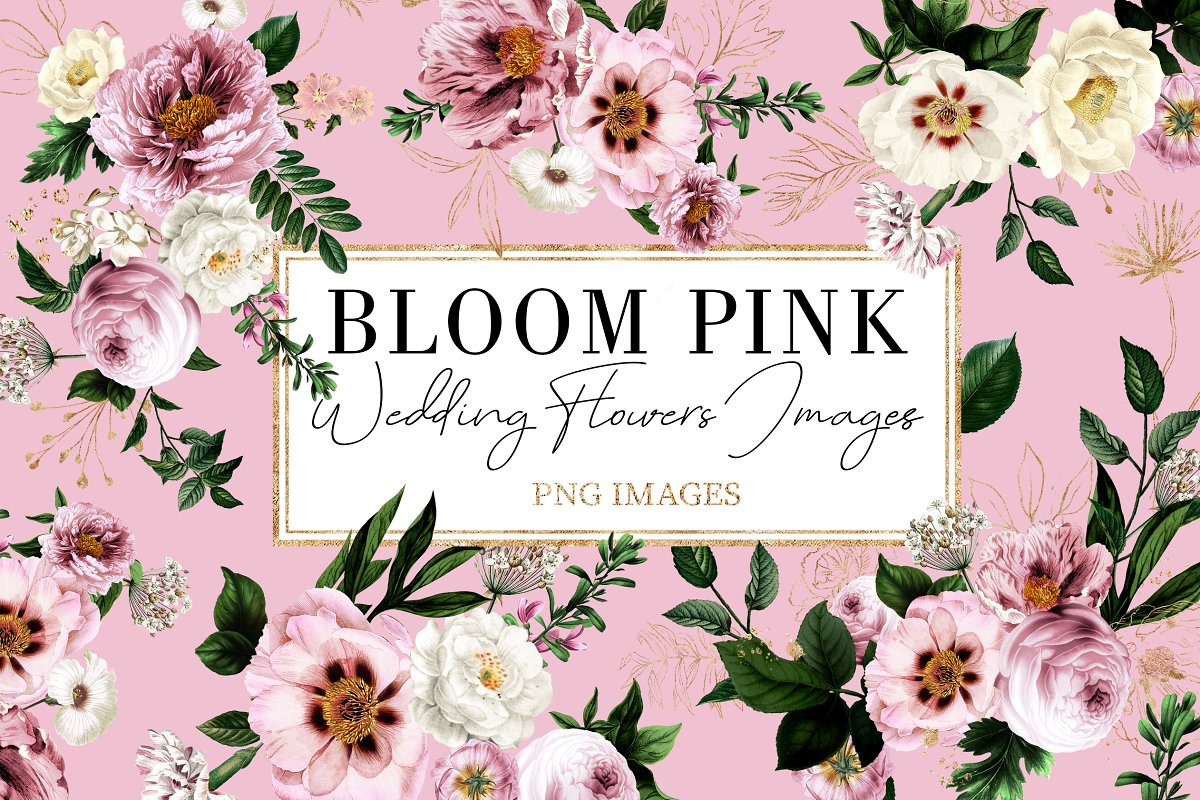 Bloom Pink Rose