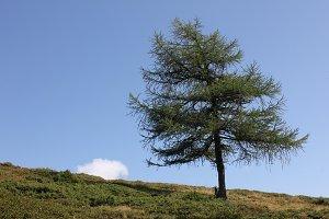 Single tree horizon