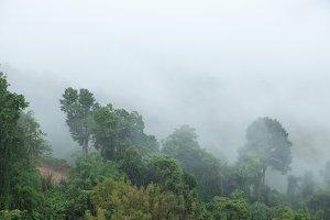Fog covered trees