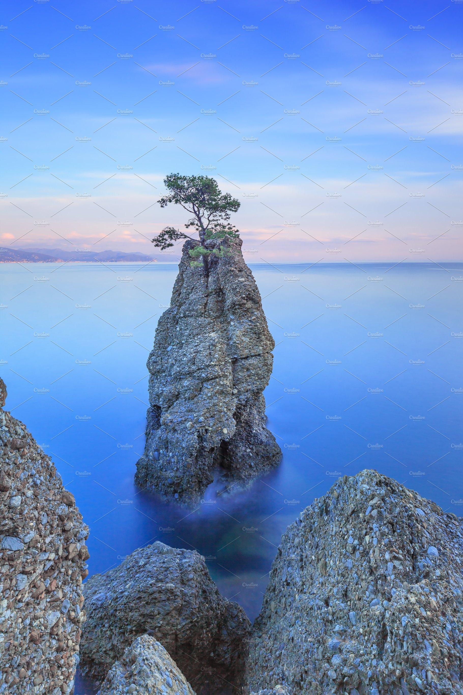 Portofino Park Pine Tree Rock Cliff Containing Aerial Beautiful And Blue High Quality Nature Stock Photos Creative Market