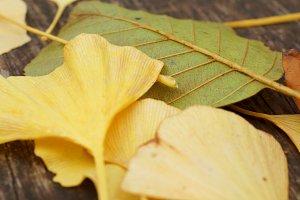 leaves on parkbench