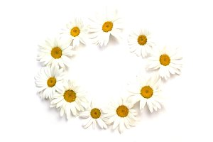Wreath of chamomile