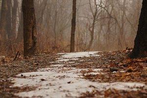 Still Snow