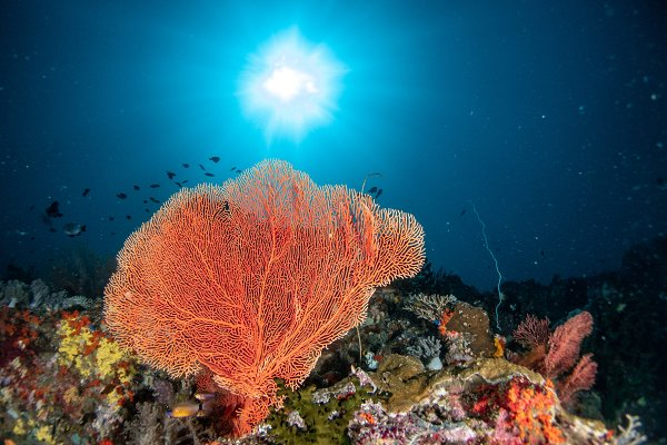 Sea Fan Containing Ocean Nature And Underwater High Quality Nature Stock Photos Creative Market