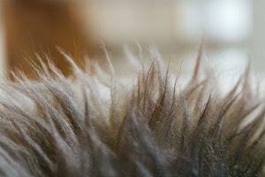 Texture carpet hairs