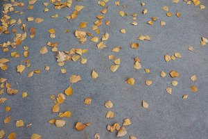 Falling leaves in autumn