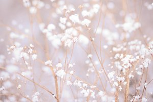 Winter plant background