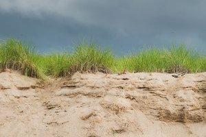 Portrait Sand Dune