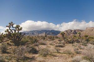 West Desert landscape