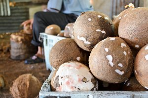 Coconut processing produce
