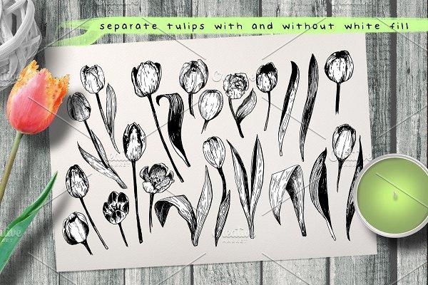 Tulips. Engraving bulb flowers.