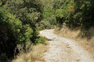 greek path