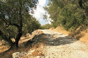 olive path