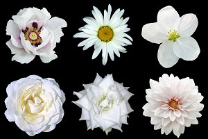 Mix collage of natural white flowers
