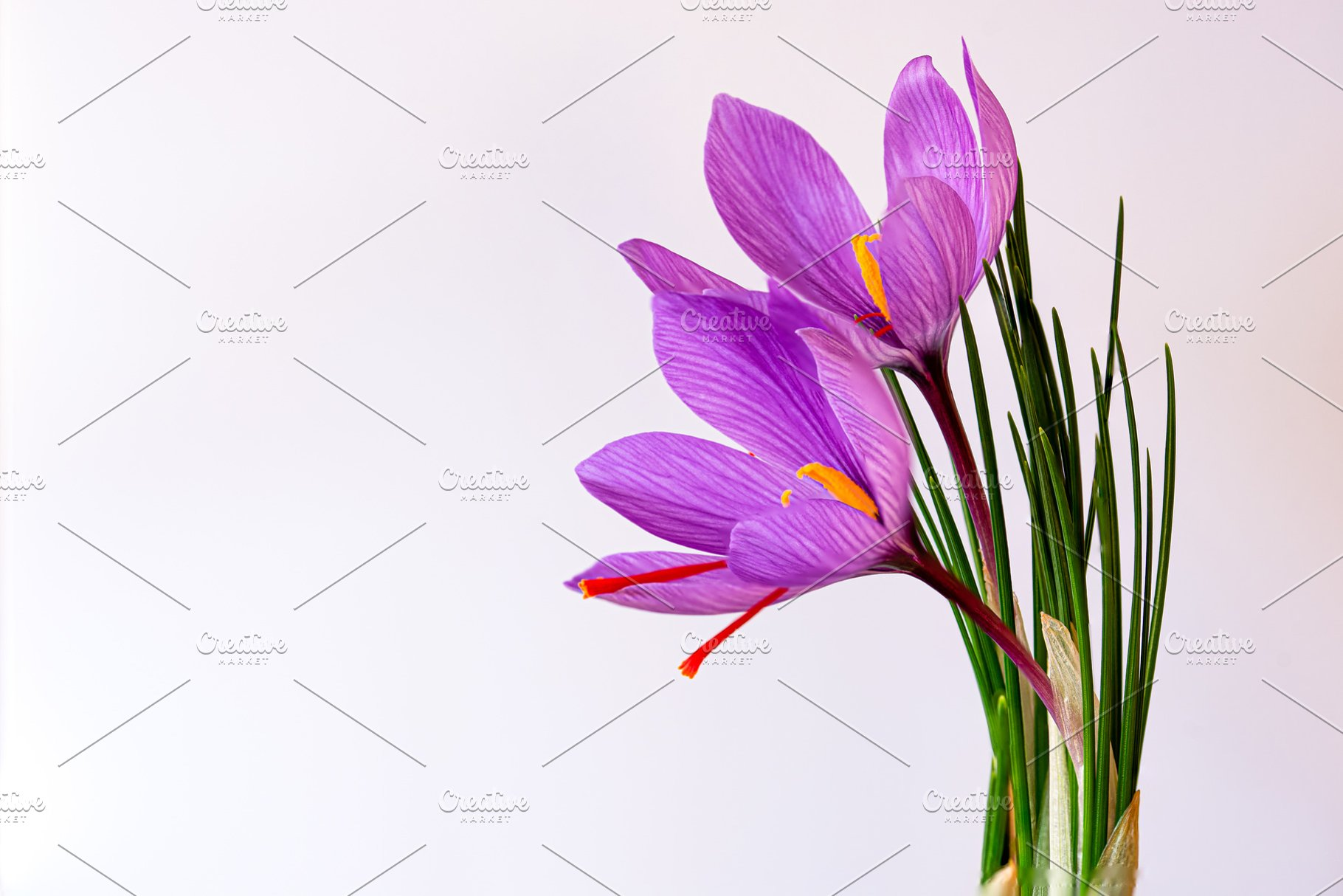 Saffron Flower Over White Background High Quality Food Images