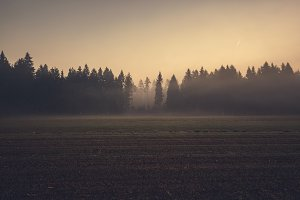 Mystic forest and fields on sunrise