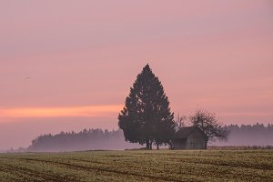 Cottage and trees on purple sunrise