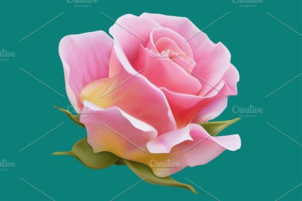 Roses, vectors set. Romantic symbol