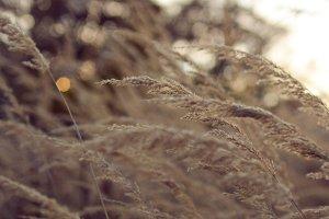 Beautiful brown autumn grass