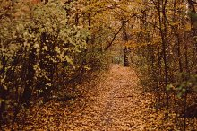Yellow Path in Forest