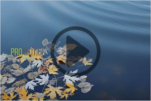 Yellow Autumn Leaves in Water. HD