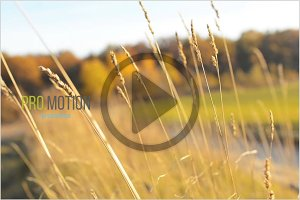 Grass in the Wind on Sunny Day. HD
