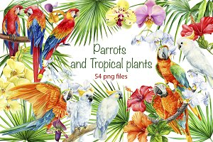 Parrots and tropical plants