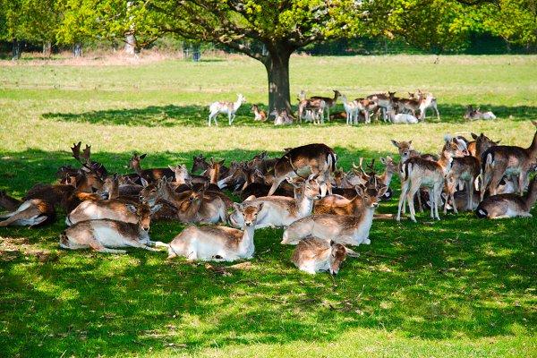 Group Of Deer In Richmond Park High Quality Animal Stock Photos Creative Market