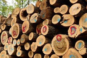 Scaled Sugar Maple Firewood