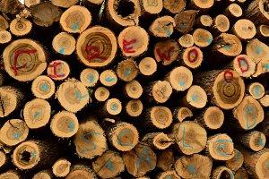 Sugar Maple Firewood