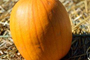 Pumpkin on Oat Straw