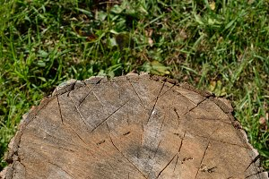Axe Marks on Chopping Block