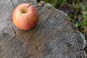Splitting Block and Organic Apple